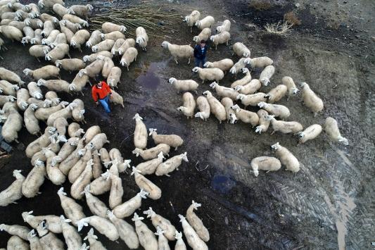 Dört dağın arasında hayvancılıkla geçimlerini sağlıyorlar