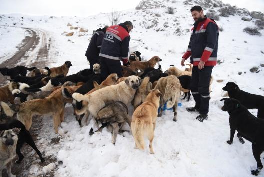 Ankara Büyükşehir Belediyesinden hayvanseverlere ücretsiz eğitim