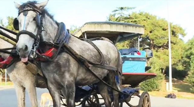 Adalarda faytonlara at koşulması 3 ay yasaklandı