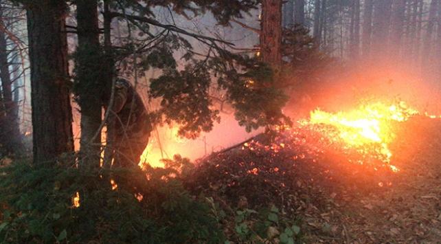 Uludağda orman yangını