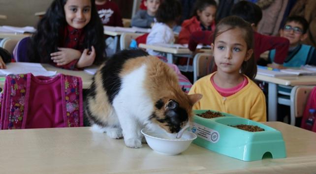 Kedi Boziş okulun maskotu oldu