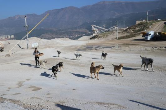 Gönüllü olarak sokak hayvanlarını besliyorlar