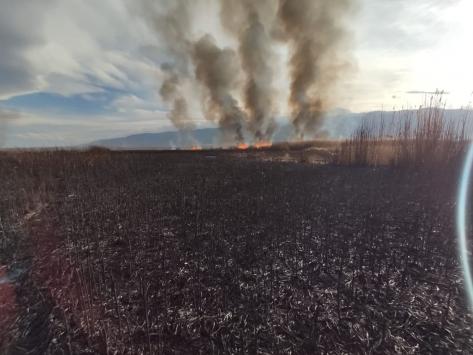 Eber Gölündeki sazlıkta çıkan yangında 35 dönüm alan zarar gördü