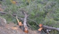 Mersin'de ormanlık alanda ağaçların kesilmesine ilişkin bir şüpheli hakkında işlem yapıldı