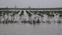 Adana'da tarım arazileri yağmur sularının altında kaldı