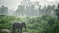 Muson yağmurları dünyada en fazla can kaybının yaşandığı doğal afet oldu