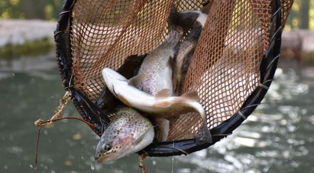Çiftlik balığı üretimi ikiye katlandı