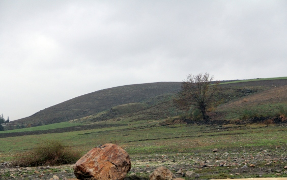 """Hatayda """"Dağ Ceylanı Yaban Hayatı Geliştirme Sahası"""" ilan edilmesi"""