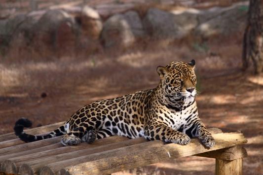 Gaziantep Hayvanat Bahçesini 4,5 milyon kişi ziyaret etti