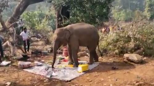 Hindistan'da yemek kokusu alan fil, piknik alanını bastı