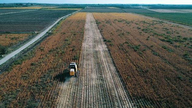 Üreticilere 425,4 milyon liralık tarımsal destek ödemesi yapılacak