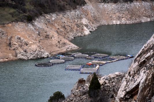 Gümüşhanede balık üretiminden ekonomiye 90 milyon liralık katkı
