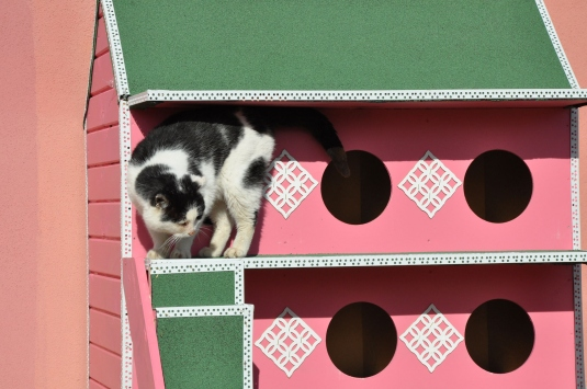 Yozgatta sokak kedilerine ısı yalıtımlı ahşap kulübe