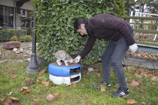 Şanlıurfada atıl otomobil lastikleri kedilere yuva oldu