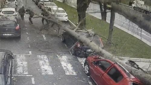 Şişli'de ağaç yoldaki insanların üzerine devrildi
