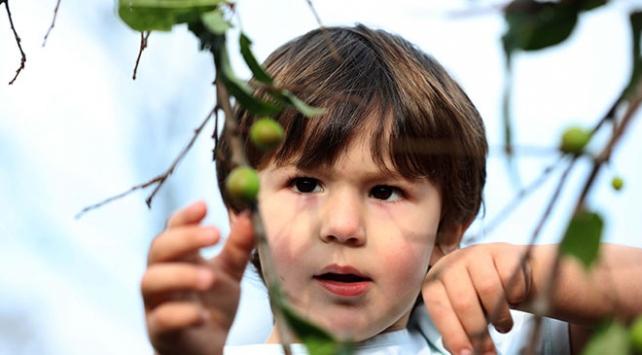 Rizede erik ve karayemiş ağaçları kış ortasında meyve verdi
