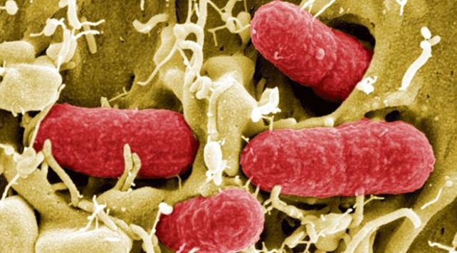 Çinde yayılan gizemli virüsten ilk ölüm