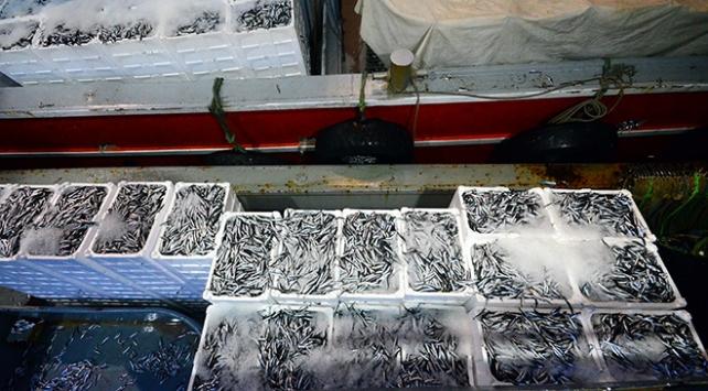 Karadenizli balıkçıların yüzü hamsi ile güldü
