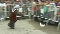 Tavuk Yakalamada Yılların Tecrübesi Konuştu