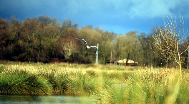 Kuş Cennetinde tüm canlıların ve bitkilerin kaydı tutulacak