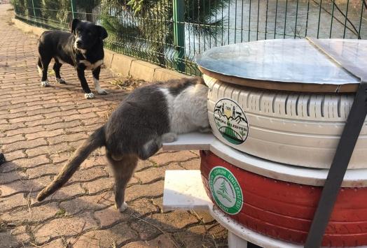 Atık araç lastikleri sokak kedilerine yuva oldu