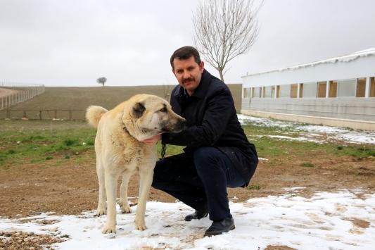 """""""Anadolu aslanı"""" için 7 milyon liralık tesis kurulacak"""