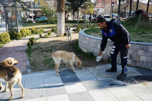 Sarıgölde sokak köpeklerine uyuz aşısı ve yem