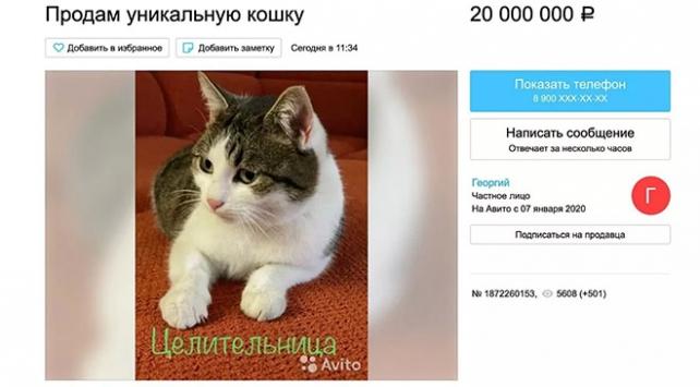 Rusyada bir kedi 320 bin dolara satışa çıktı