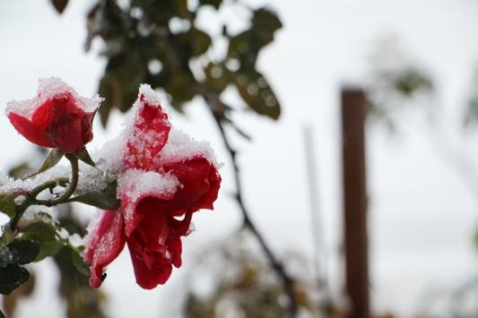 Silivride kar yağışı başladı