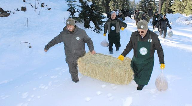Ilgaz Dağı'nda yaban hayvanları için yemleme yapıldı