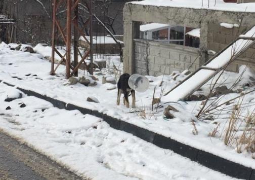 Kayseride bidona başı sıkışan köpeği jandarma kurtardı