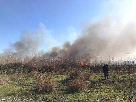 Antalyada sazlık alanda çıkan yangın kontrol altına alınmaya çalışılıyor