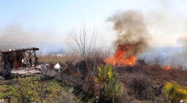 Antalyada sazlık alanda yangın