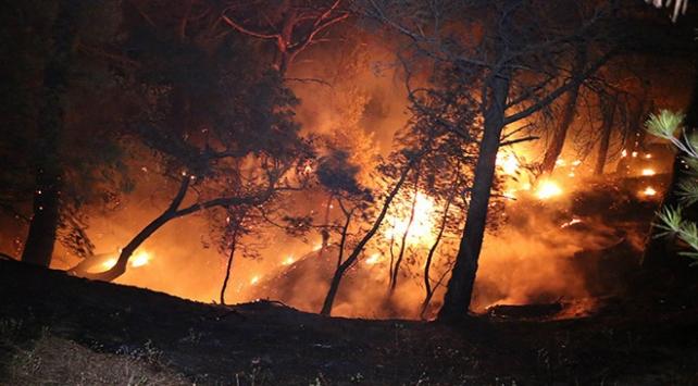Adanada orman yangını kontrol altına alındı