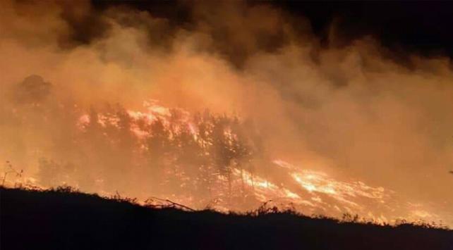 Adanada iki ayrı noktada orman yangını