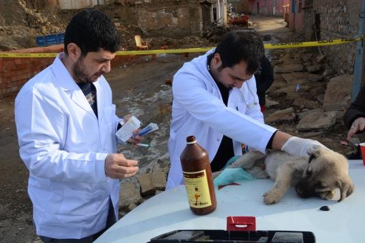 Malatyada gönüllü veterinerler depremden etkilenen hayvanları tedavi etti