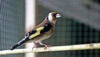 Yurt dışına saka kuşu çıkarmaya çalışan kişiye 94 bin lira ceza