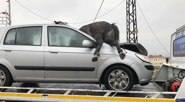 İstanbulda otomobilin çarptığı 3 at telef oldu