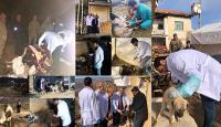 Deprem mağduru hayvanlara gönüllü veteriner şefkati