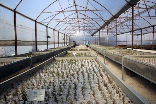 Mardinde bitki ve fidan üretimine hız verildi.