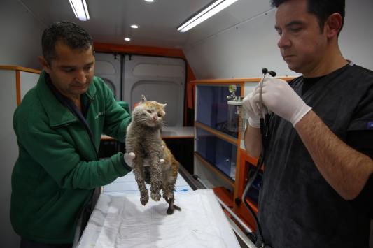 Enkaz altından çıkarılan kedi Antalyaya getirildi