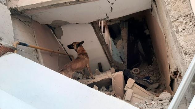 Arama Kurtarma Köpeği Altar, depremzedelerin can simidi oldu