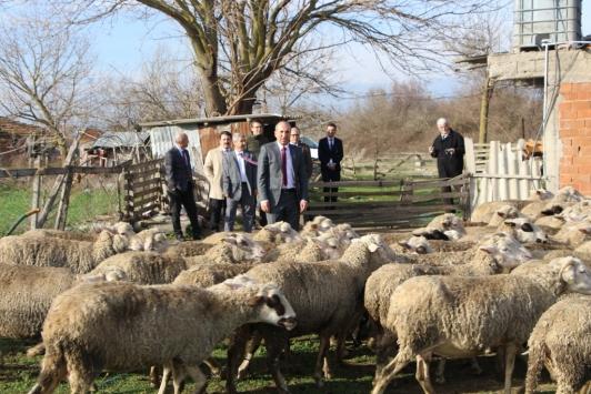 Eski hükümlü, İŞKUR projesiyle koyun yetiştiricisi oldu