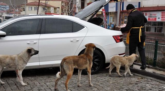 Sokak hayvanları her gün onu bekliyor