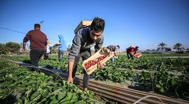 İsrail Filistinin tarım ürünlerinin ihracatına engel oluyor