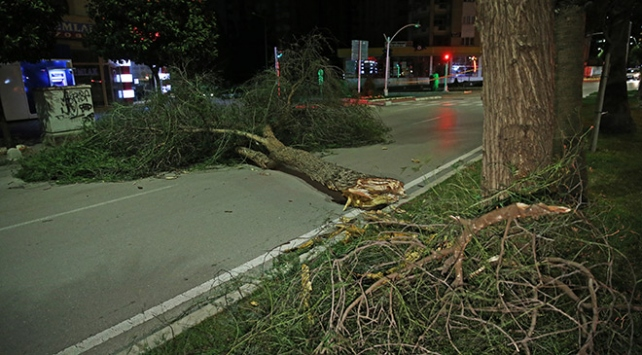 Adanada fırtına ağaçları ve elektrik direklerini devirdi
