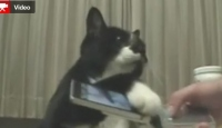 Kedinin Sahibinden Ricası