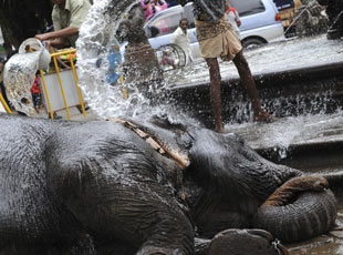 Filler Serinlemenin Yolunu Biliyor