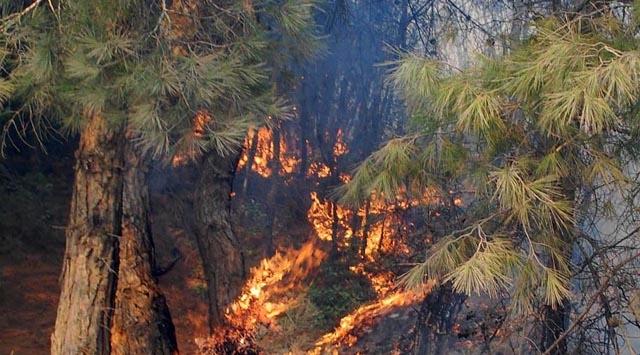 Aydındaki orman yangını