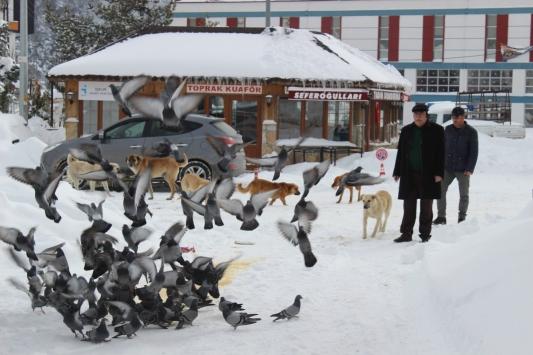 Belediye başkanı sokak hayvanları ve kuşlar için sokağa yemek bıraktı
